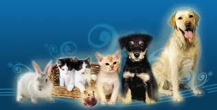 Las mascotas son más importantes que simple compañía.
