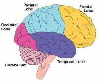 desarrollar los hemisferios cerebrales