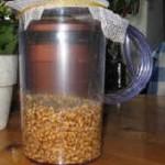 Rejuvelac, elixir de trigo fermentado para rejuvenecer. Mejorar la vida.