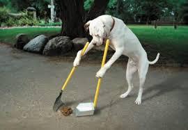 Enséñale buenas rutinas a tu perro.