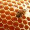 La miel de abeja. El manjar curativo. Tipos y Propiedades.