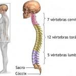 Prevención y curación a tu alcance del dolor de espalda
