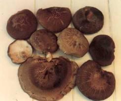 Considera ciertos hongos en tu alimentación habitual.