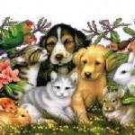 Las mascotas maravilla, la familia y la prosperidad. Nombres de mascotas.