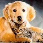 Masajes para las mascotas. Terapias y dietas para mascotas.