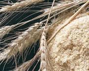 El germen de trigo es su núcleo alimenticio.